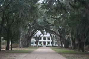 Southern plantation, January, 2013