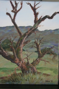 Old oak at Russian Ridge
